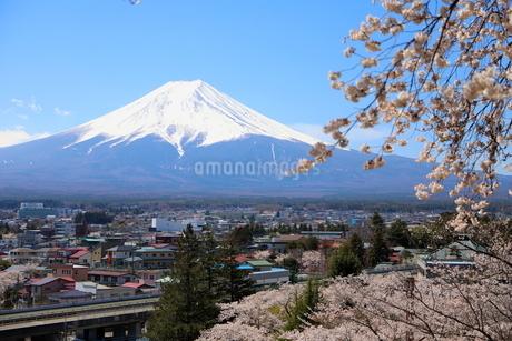 山梨県 新倉山浅間公園の風景 富士山と満開の桜の写真素材 [FYI01252926]