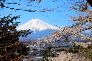 山梨県 新倉山浅間公園の風景 富士山と満開の桜の写真素材 [FYI01252928]