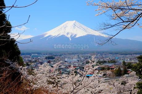 山梨県 新倉山浅間公園の風景 富士山と満開の桜の写真素材 [FYI01252932]