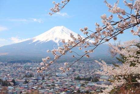 山梨県 新倉山浅間公園の風景 富士山と満開の桜の写真素材 [FYI01252938]