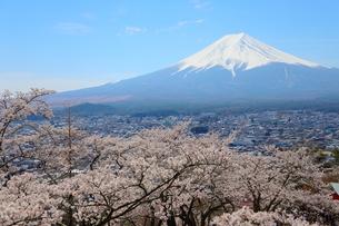 山梨県 新倉山浅間公園の風景 富士山と満開の桜の写真素材 [FYI01252944]