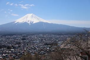 山梨県 新倉山浅間公園の風景 富士山と満開の桜の写真素材 [FYI01252945]