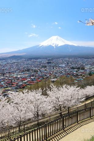 山梨県 新倉山浅間公園の風景 富士山と満開の桜の写真素材 [FYI01252947]