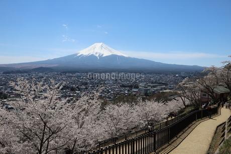 山梨県 新倉山浅間公園の風景 富士山と満開の桜の写真素材 [FYI01252948]