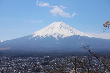 山梨県 新倉山浅間公園の風景 富士山と満開の桜の写真素材 [FYI01252949]