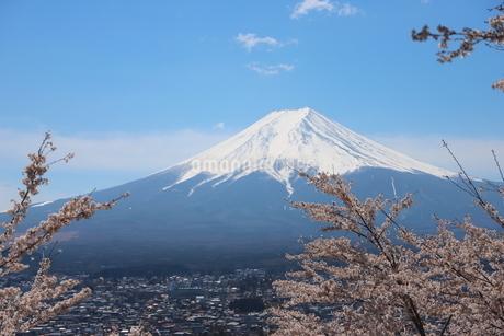 山梨県 新倉山浅間公園の風景 富士山と満開の桜の写真素材 [FYI01252952]