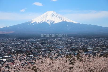 山梨県 新倉山浅間公園の風景 富士山と満開の桜の写真素材 [FYI01252954]