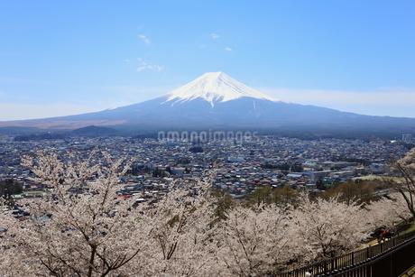 山梨県 新倉山浅間公園の風景 富士山と満開の桜の写真素材 [FYI01252959]