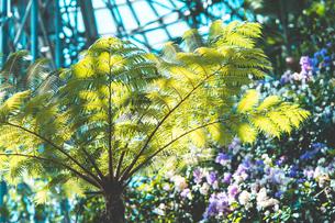 Tropical plantsの写真素材 [FYI01253013]