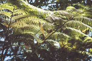 Tropical plantsの写真素材 [FYI01253014]