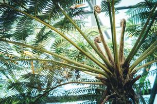 Tropical plantsの写真素材 [FYI01253015]