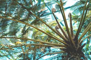 Tropical plantsの写真素材 [FYI01253016]