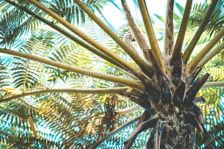Tropical plantsの写真素材 [FYI01253017]