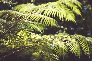 Tropical plantsの写真素材 [FYI01253018]