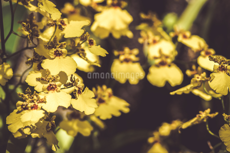 Tropical plantsの写真素材 [FYI01253019]