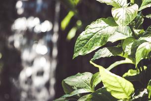 Tropical plantsの写真素材 [FYI01253021]