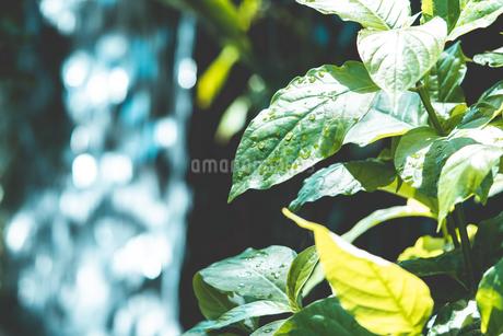 Tropical plantsの写真素材 [FYI01253022]