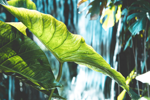Tropical plantsの写真素材 [FYI01253023]