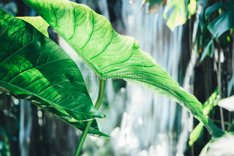 Tropical plantsの写真素材 [FYI01253024]
