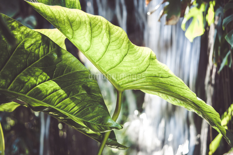 Tropical plantsの写真素材 [FYI01253026]