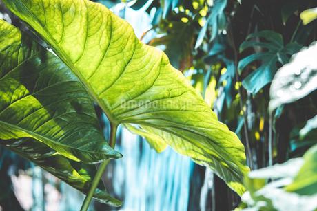 Tropical plantsの写真素材 [FYI01253028]