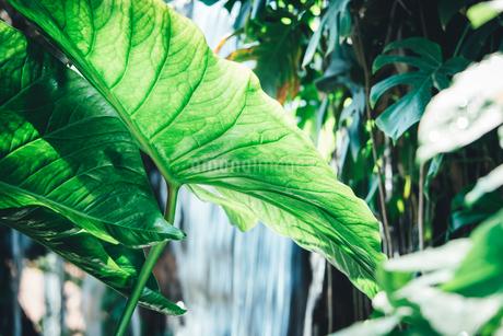 Tropical plantsの写真素材 [FYI01253029]