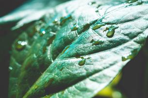 Tropical plantsの写真素材 [FYI01253031]