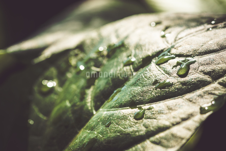 Tropical plantsの写真素材 [FYI01253032]