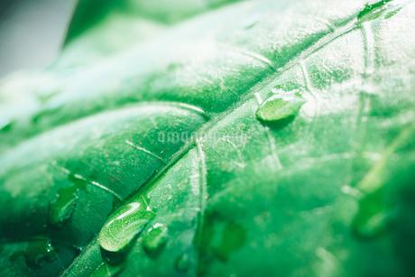 Tropical plantsの写真素材 [FYI01253058]