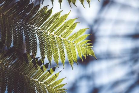 Tropical plantsの写真素材 [FYI01253064]