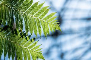 Tropical plantsの写真素材 [FYI01253065]