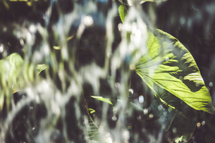 Tropical plantsの写真素材 [FYI01253066]