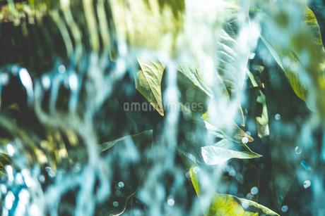 Tropical plantsの写真素材 [FYI01253067]
