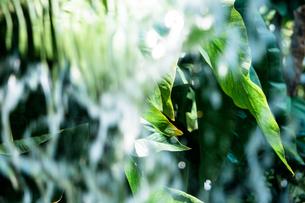 Tropical plantsの写真素材 [FYI01253068]