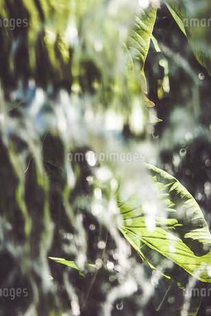 Tropical plantsの写真素材 [FYI01253070]