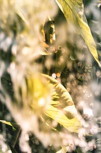 Tropical plantsの写真素材 [FYI01253071]