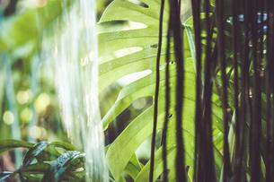 Tropical plantsの写真素材 [FYI01253073]