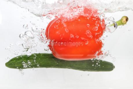 水中のパプリカとキュウリの写真素材 [FYI01253165]