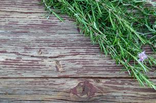 ローズマリーの写真素材 [FYI01253167]