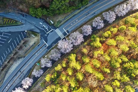 ドローンで撮影した桜並木の写真素材 [FYI01253198]