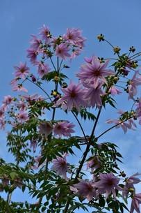花の写真素材 [FYI01253269]