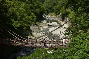 かずら橋の写真素材 [FYI01253279]