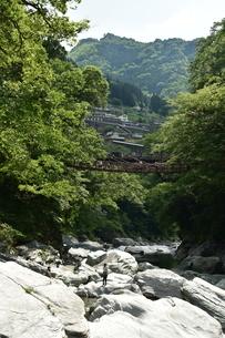 かずら橋の写真素材 [FYI01253280]