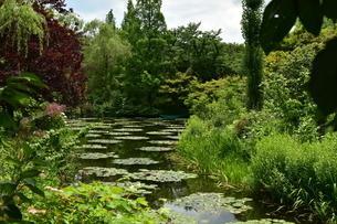 絵画のような庭園の写真素材 [FYI01253281]