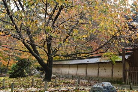 落葉の写真素材 [FYI01253292]