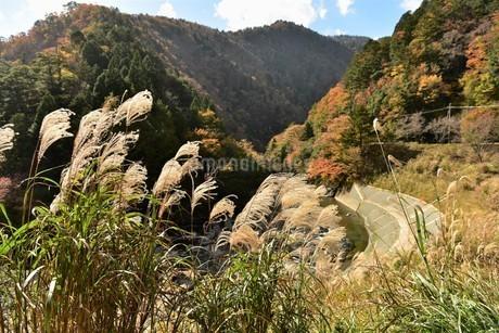 山間のススキの写真素材 [FYI01253295]