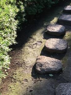 公園の飛び石の写真素材 [FYI01253325]