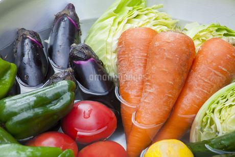 夏野菜の写真素材 [FYI01253356]