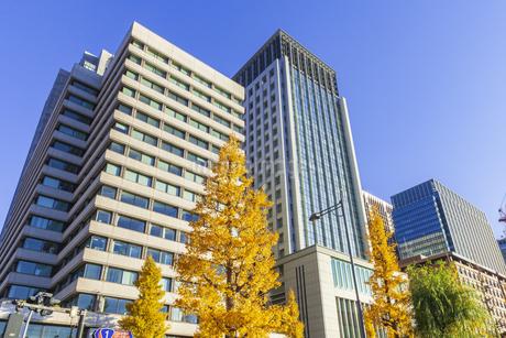 紅葉の木立と丸の内ビル群の写真素材 [FYI01253361]