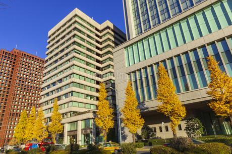紅葉の木立と丸の内ビル群の写真素材 [FYI01253365]